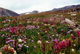 Alpine Villa Activities Summer Wildflowers, mountainside covered with bright-colored wildflowers